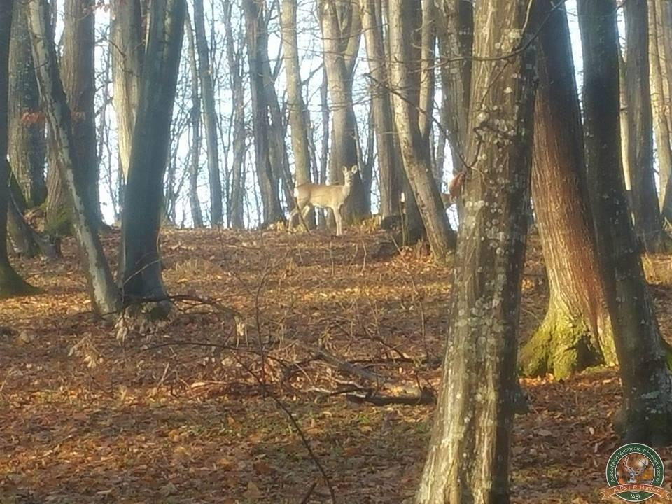 avps-lr-hunters-borosesti_11-15