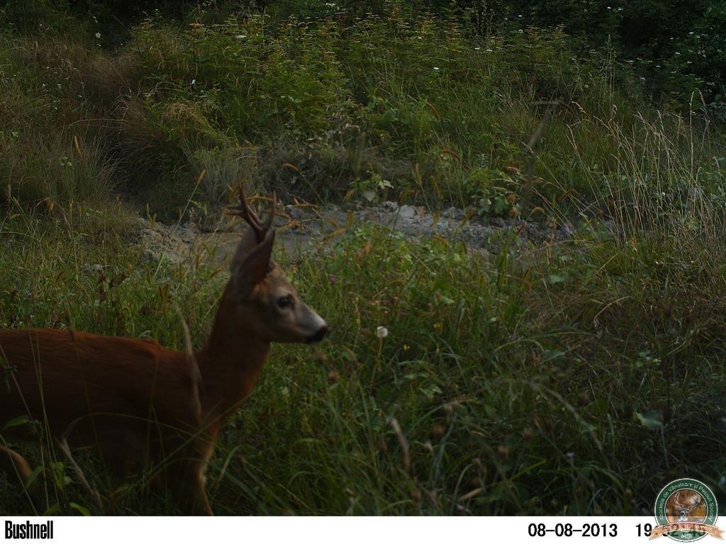 avps-lr-hunters-borosesti_11-52