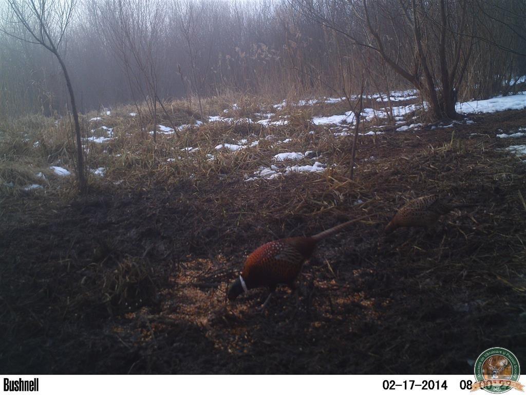 avps-lr-hunters-borosesti_11-57