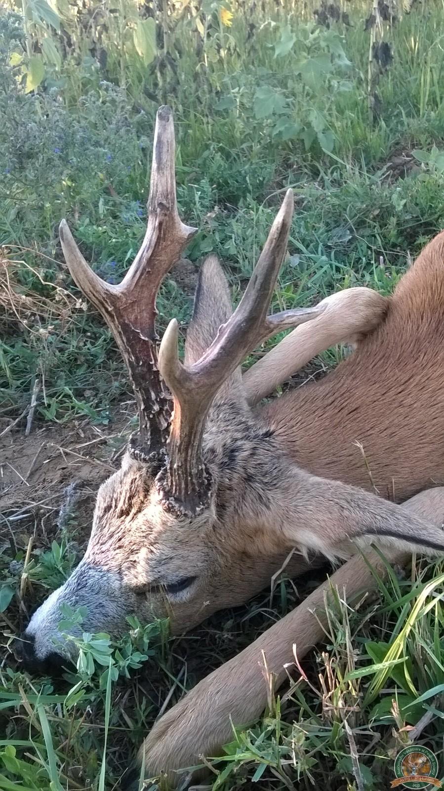 avps-lr-hunters-crasnita_48-25
