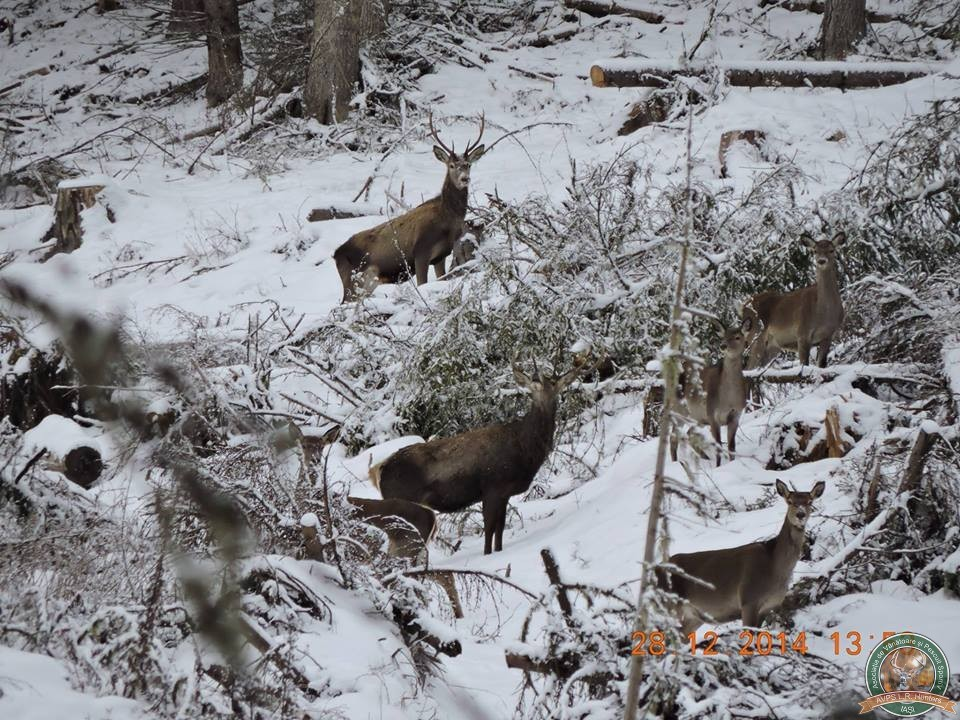 avps-lr-hunters-dragosa_25-4