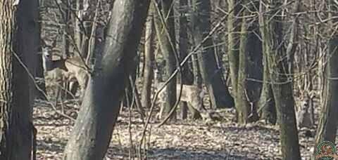 avps-lr-hunters-lepsa_20-23