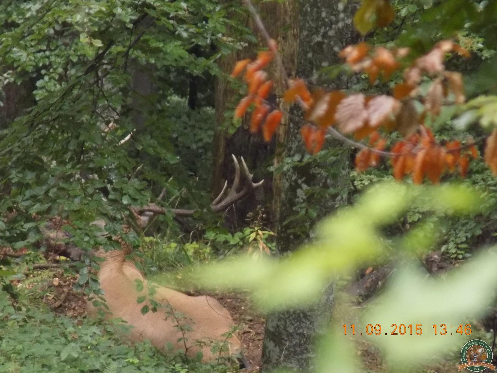 avps-lr-hunters-lepsa_20-53