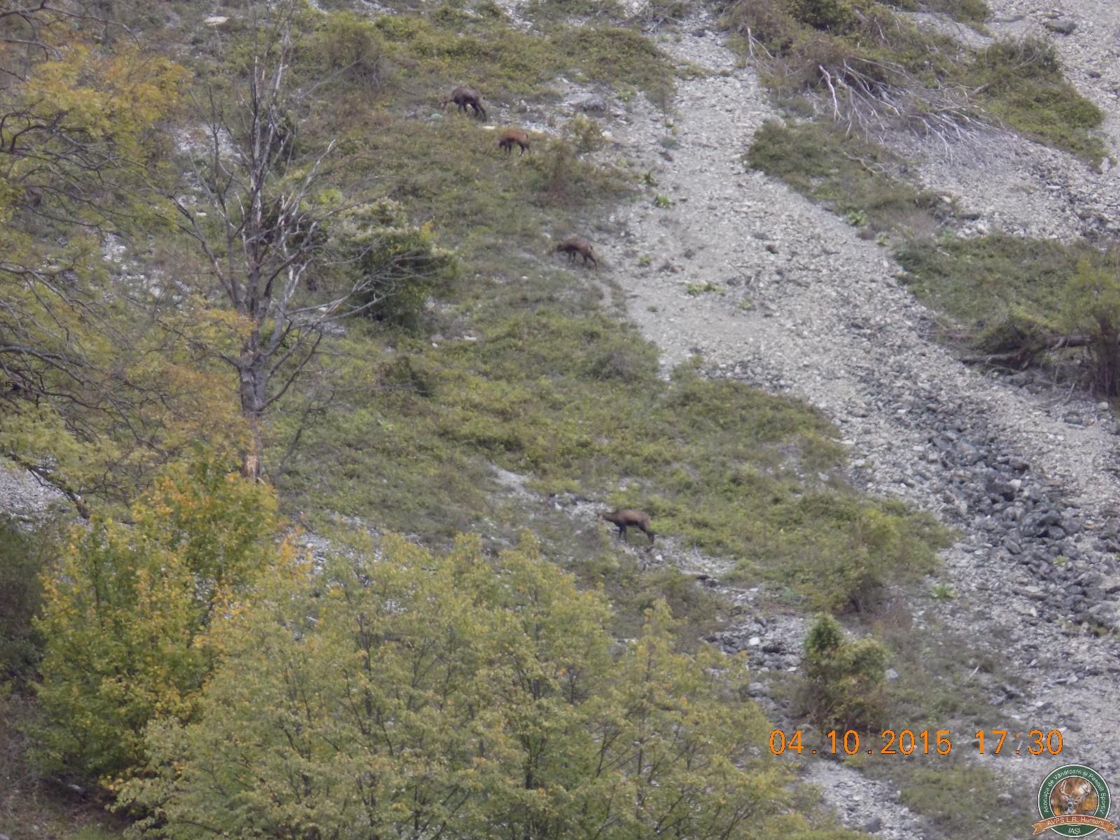 avps-lr-hunters-lepsa_20-57