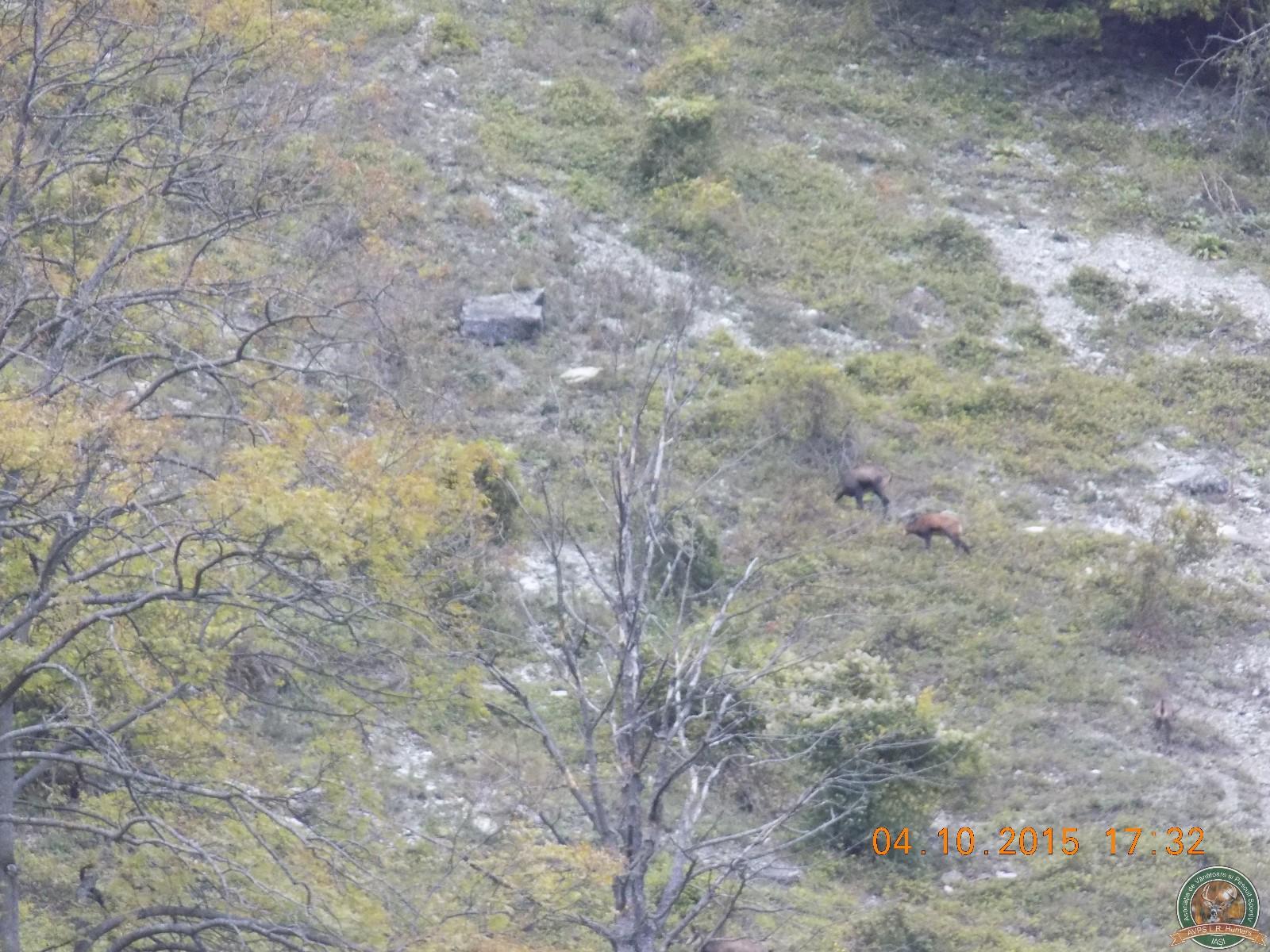 avps-lr-hunters-lepsa_20-59