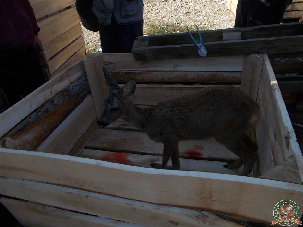 avps-lr-hunters-liteni_60-31